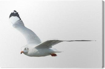 Leinwandbild Seagull isoliert auf weiß
