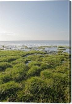 Leinwandbild Seegras am Ufer der Nordsee - Duhnen, Deutschland