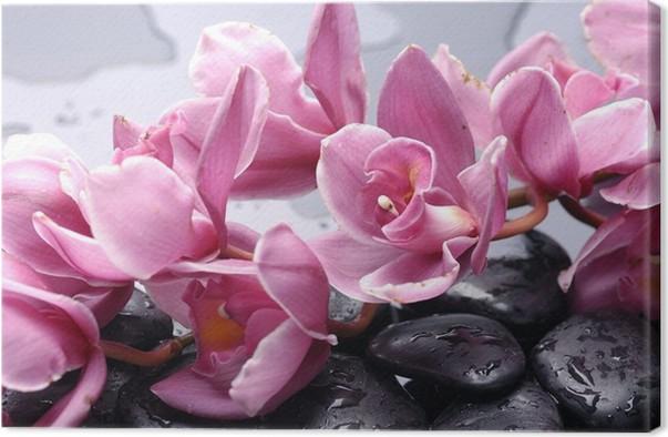 leinwandbild set von cattleya orchidee und stein mit. Black Bedroom Furniture Sets. Home Design Ideas
