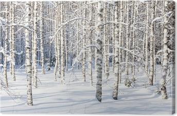 Leinwandbild Snowy Birkenstämmen