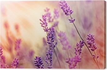 Leinwandbild Soft-Fokus auf schöne Lavendel und Sonnenstrahlen - Sonnenstrahlen