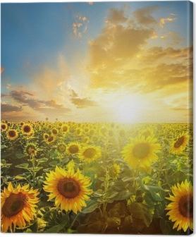 Leinwandbild Sommerlandschaft: Schönheit Sonnenuntergang über Sonnenblumen-Feld