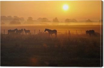Leinwandbild Sonnenaufgang auf einer pferdeweide
