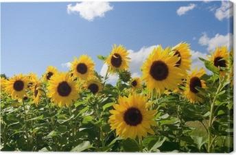 Leinwandbild Sonnenblumen