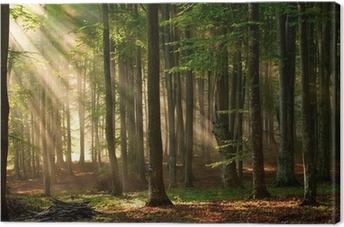 Leinwandbild Sonnenstrahlen durchbohren den Wald