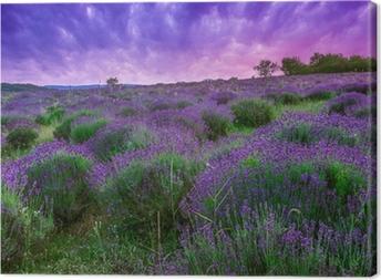Leinwandbild Sonnenuntergang über ein Sommer Lavendel-Feld in Tihany, Ungarn