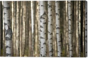 Leinwandbild Stämme der Birken