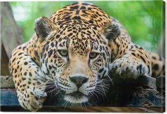 Leinwandbild Südamerikanischen Jaguar