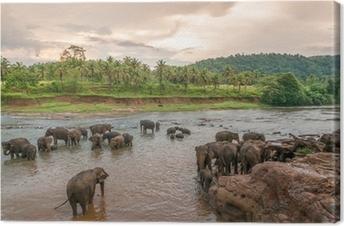 Leinwandbild Swimmong Elefanten