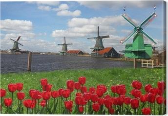 Leinwandbild Traditionelle holländische Windmühlen mit roten Tulpen, Amsterdam, Holland