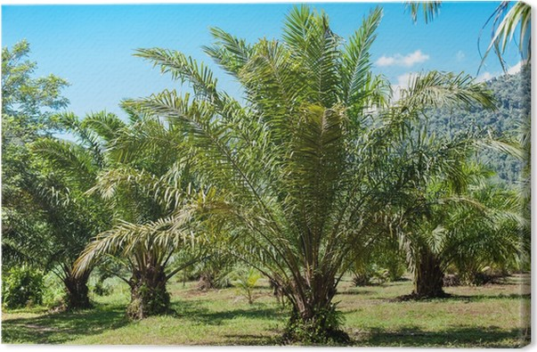 Leinwandbild Tropische Pflanze im Garten • Pixers® - Wir leben, um ...