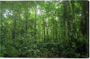 Leinwandbild Tropischer Regenwald-Landschaft, Amazon