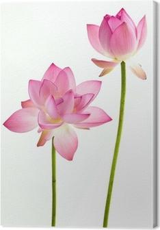 Leinwandbild Twain rosa Seerose Blume (Lotus) und weißem Hintergrund.