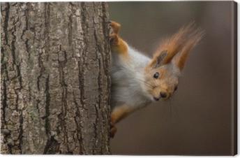 Leinwandbild Überraschtes Eichhörnchen, spähend hinter einem Baum