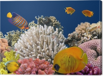 Leinwandbild Unterwasser-Leben eines hart Korallenriff, Rotes Meer, Ägypten