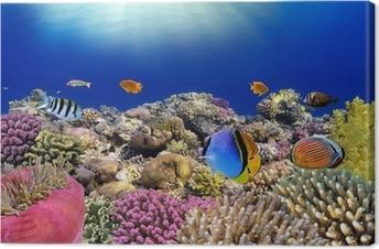 Leinwandbild Unterwasser-Welt. Coral Fische des Roten Meeres.