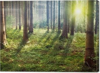 Leinwandbild Wald Sunset
