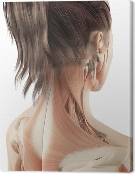 Leinwandbild Weibliche Muskulatur des Halses • Pixers® - Wir leben ...