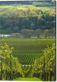 Leinwandbild Weinbergen und Wald