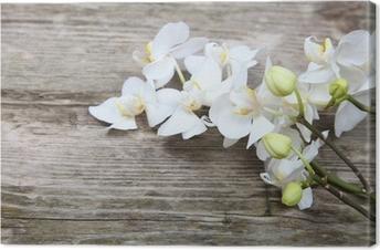 Leinwandbild Weiße Orchidee (Phalaenopsis)