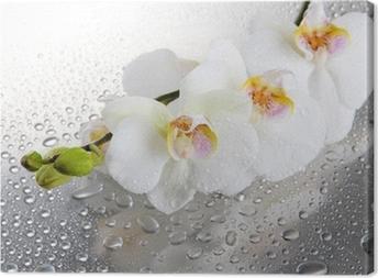 Leinwandbild Weiße Orchideen mit Tropfen