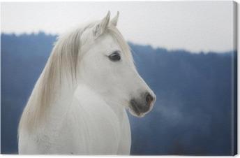 Leinwandbild Weiße Vollblut Araber Stute im Schnee