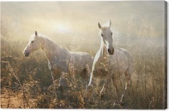 Leinwandbild Weißen Pferd im Galopp auf der Wiese