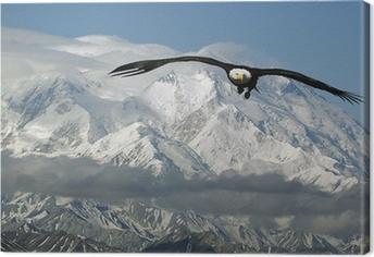 Leinwandbild Weißkopfseeadler in den Bergen
