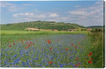 Leinwandbild Wiese mit Kornblumen und Mohn in Auvergne
