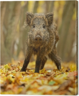 Leinwandbild Wildschwein