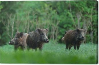 Leinwandbild Wildschweine mit Wald-Hintergrund