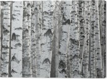 Leinwandbild Winter Birch Tree Forest Hintergrund
