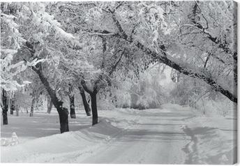 Leinwandbild Winter Park, Landschaft