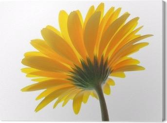Leinwandbild Yellow gerbera