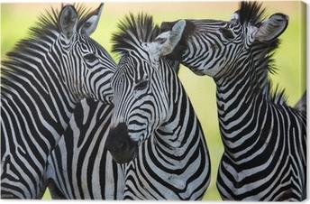 Leinwandbild Zebras küssen und huddling