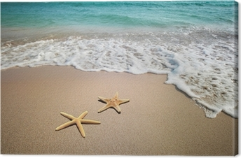 Leinwandbild Zwei Seesterne am Strand