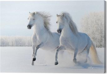 Leinwandbild Zwei weiße Pferde, die im Schnee galoppieren