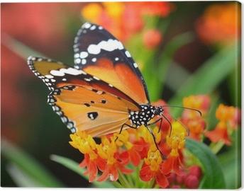 Lerretbilde Butterfly på oransje blomst i hagen