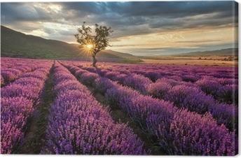 Lerretbilde Fantastisk landskap med lavendelfelt ved soloppgang