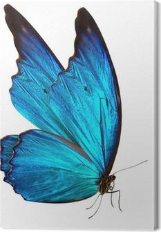 Lerretbilde Sommerfugl makro bakgrunn