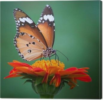 Lerretbilde Sommerfugl på en blomst