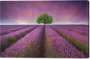 Lerretbilde Stunning lavendel felt landskap Sommersolnedgang med enkelt tre