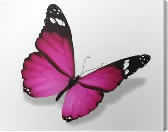 Lerretbilde Violet sommerfugl, isolert på hvit