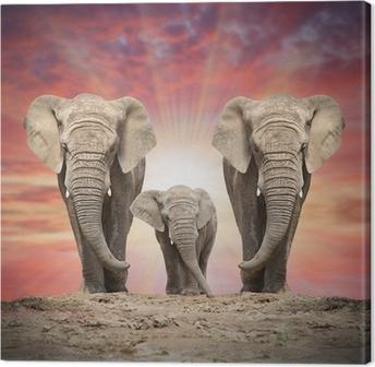 Lerretsbilde Afrikansk elefantfamilie på veien.