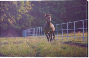 Lerretsbilde Brun hest galloping på trærne bakgrunn langs hvitt gjerde på sommeren