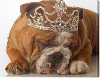 Lerretsbilde Engelsk bulldog med prinsesse krone og dumt uttrykk 4afa68ff90946