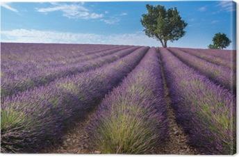 Lerretsbilde Lavendelfelt i Valensole plateau, Provence (Frankrike)