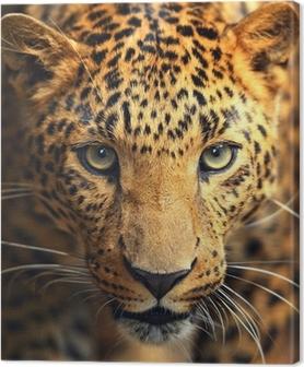Lerretsbilde Leopardportrett