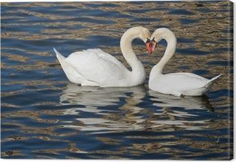 Lerretsbilde Romantiske svaner i vår.