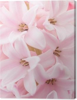 Lerretsbilde Rosa hyacint